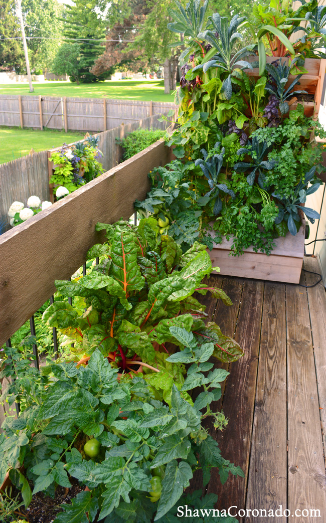 Balcony Wall Garden and Container Garden © copyright Shawna Coro
