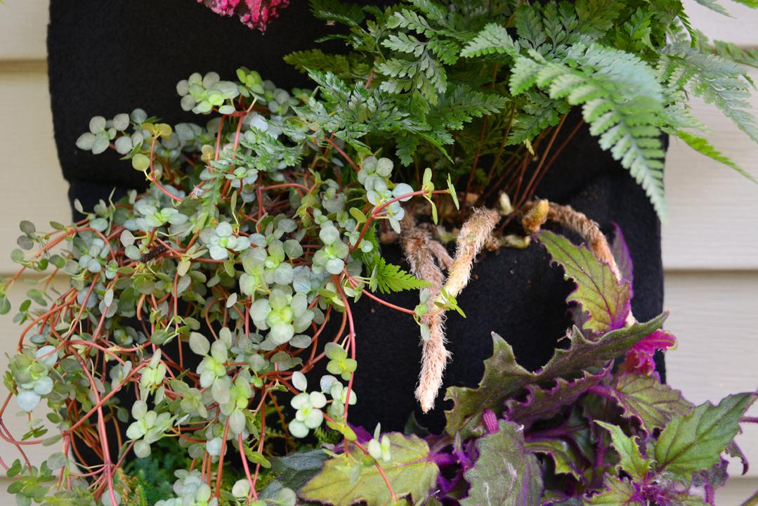 Freestanding Entrance Garden Houseplants