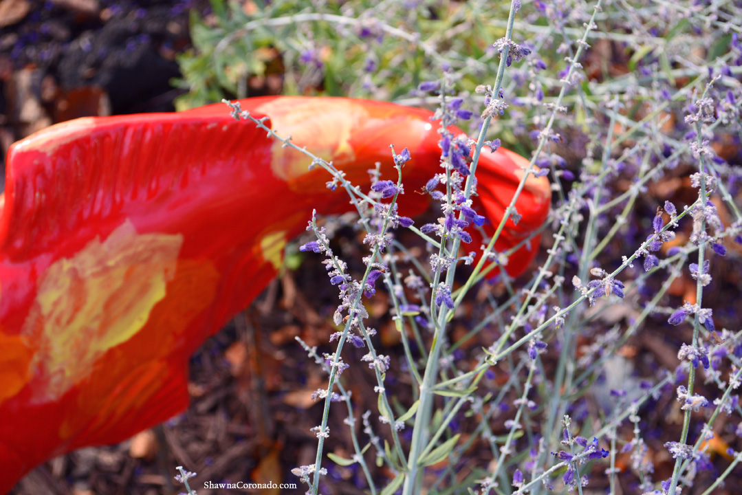 Fall Koi Fish In The Garden Closeup © copyright Shawna Coronado.