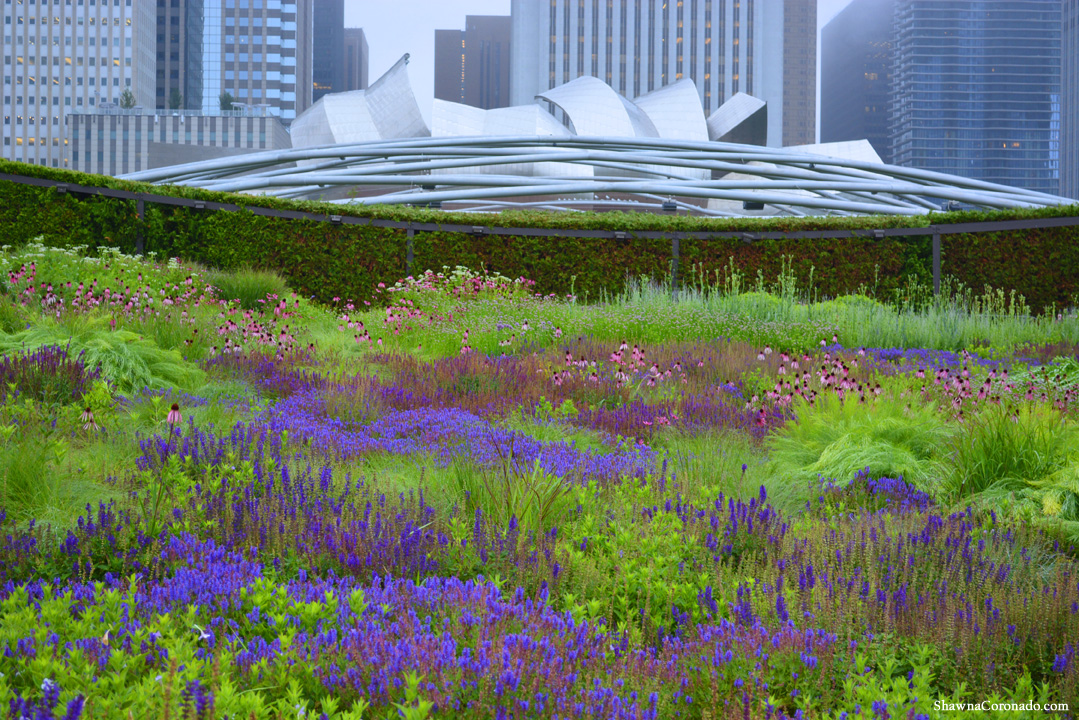 The Lurie Garden in Chicago