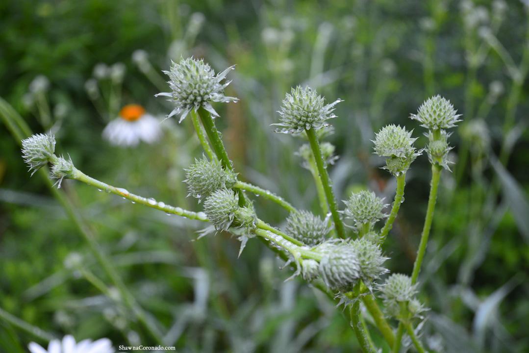 Lurie Garden Morning Dew