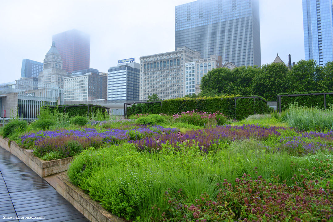 Lurie Garden in the Fog by Shawna Coronado