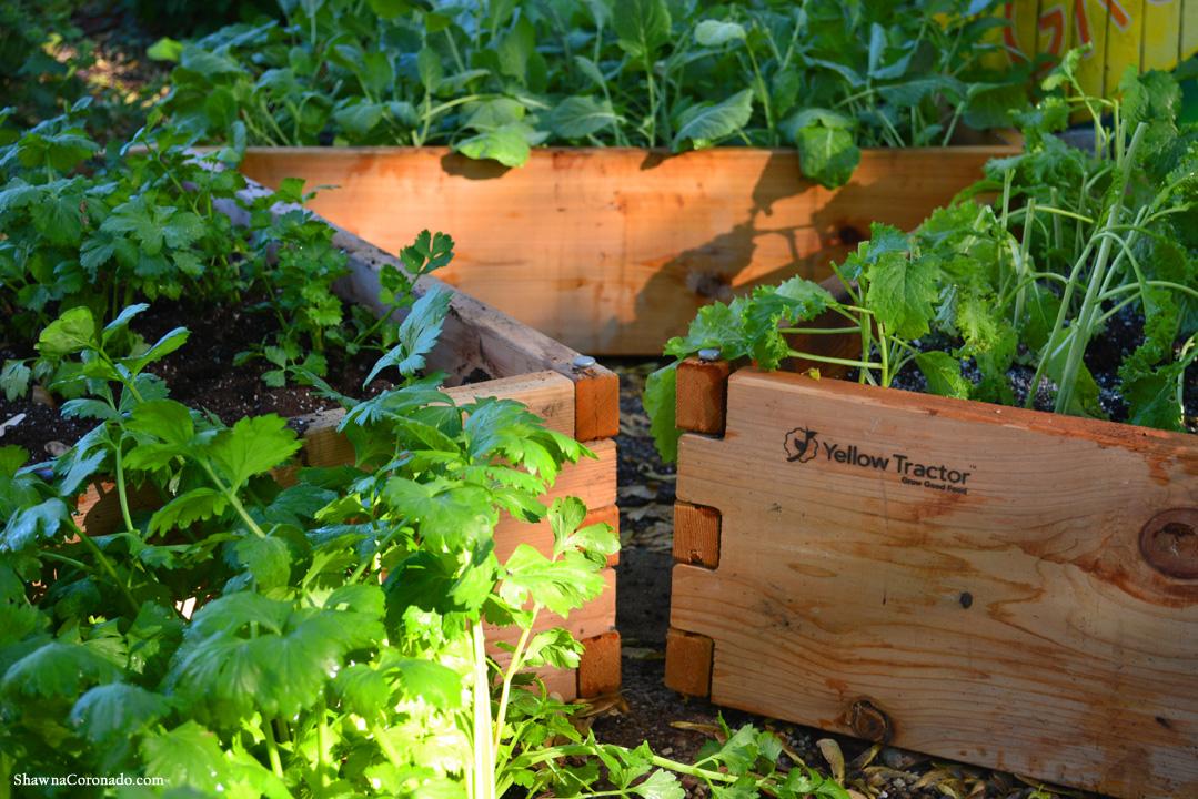 How To Plant A Raised Garden Bed Shawna Coronado