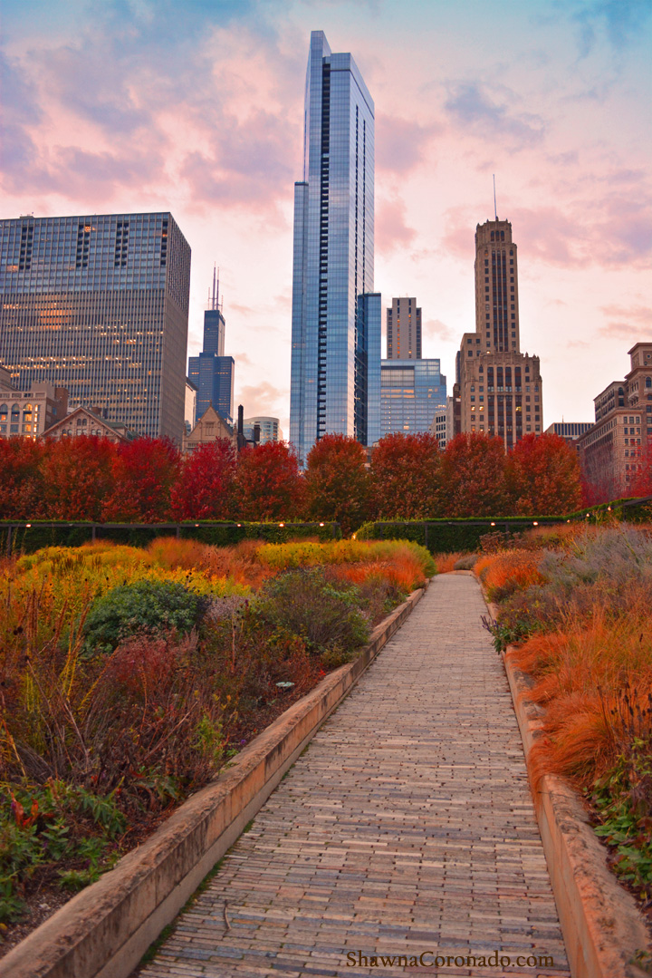 Dawn Path at The Lurie Garden in Chicago © Shawna Coronado