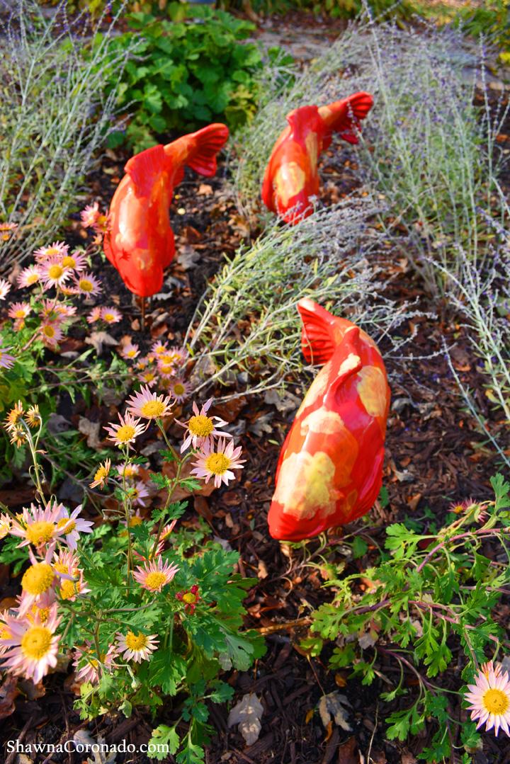 Fall Koi Fish In The Garden © copyright Shawna Coronado.jpg