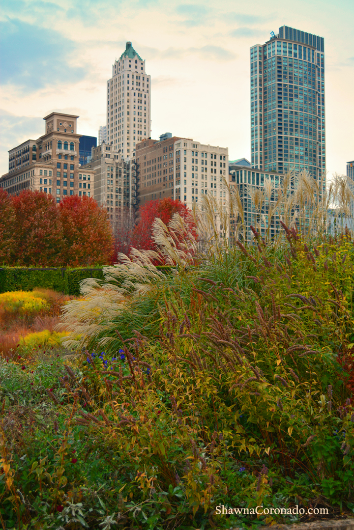 Fall Lurie Garden Grasses Chicago © Shawna Coronado