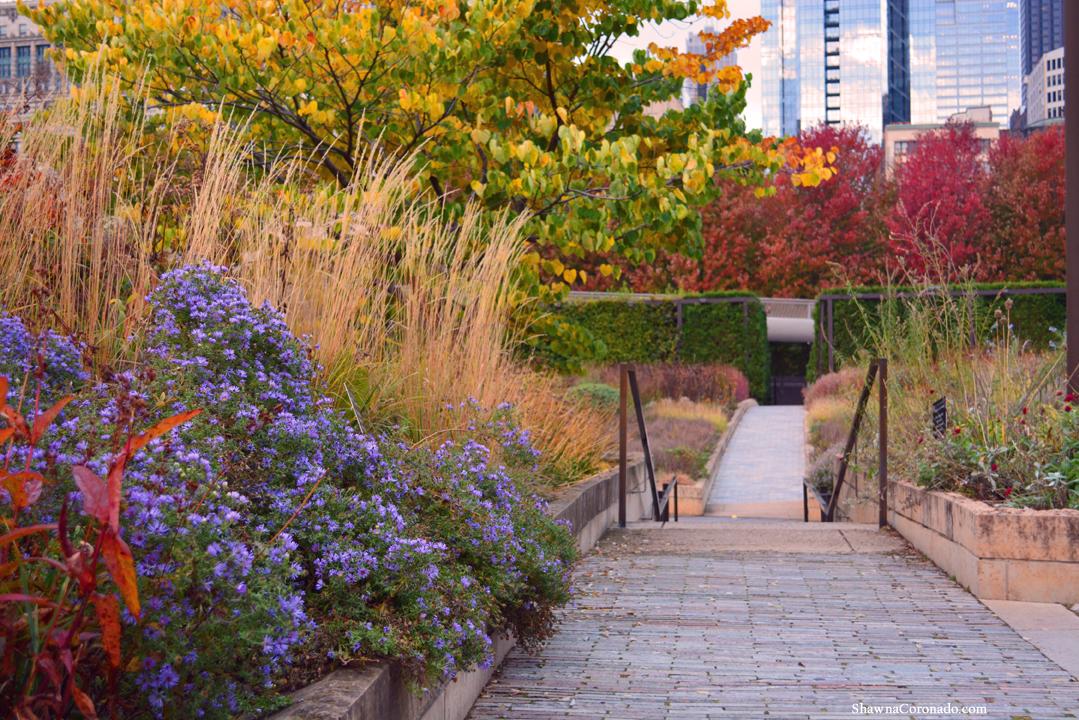 Fall Path Lurie Garden Chicago © copyright Shawna Coronado