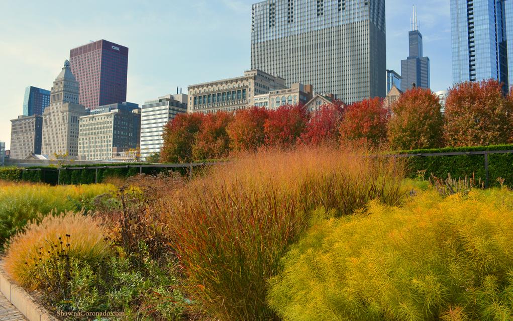 Fall Sunny Day Lurie Garden © Shawna Coronado.jpg