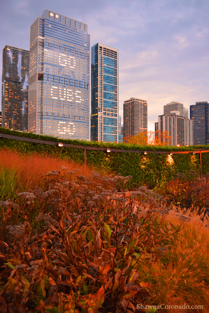 Native Plants Cheer Cubs from The Lurie Garden at Dawn in Chicag