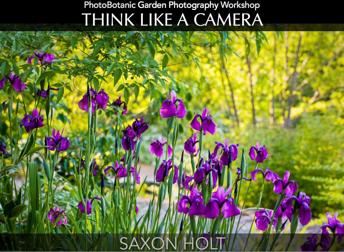 Saxon Holt Think like a camera