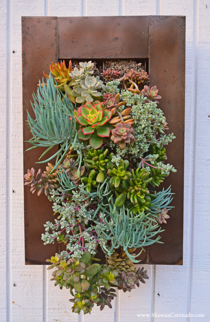 Living Wall Garden With Succulent Plants