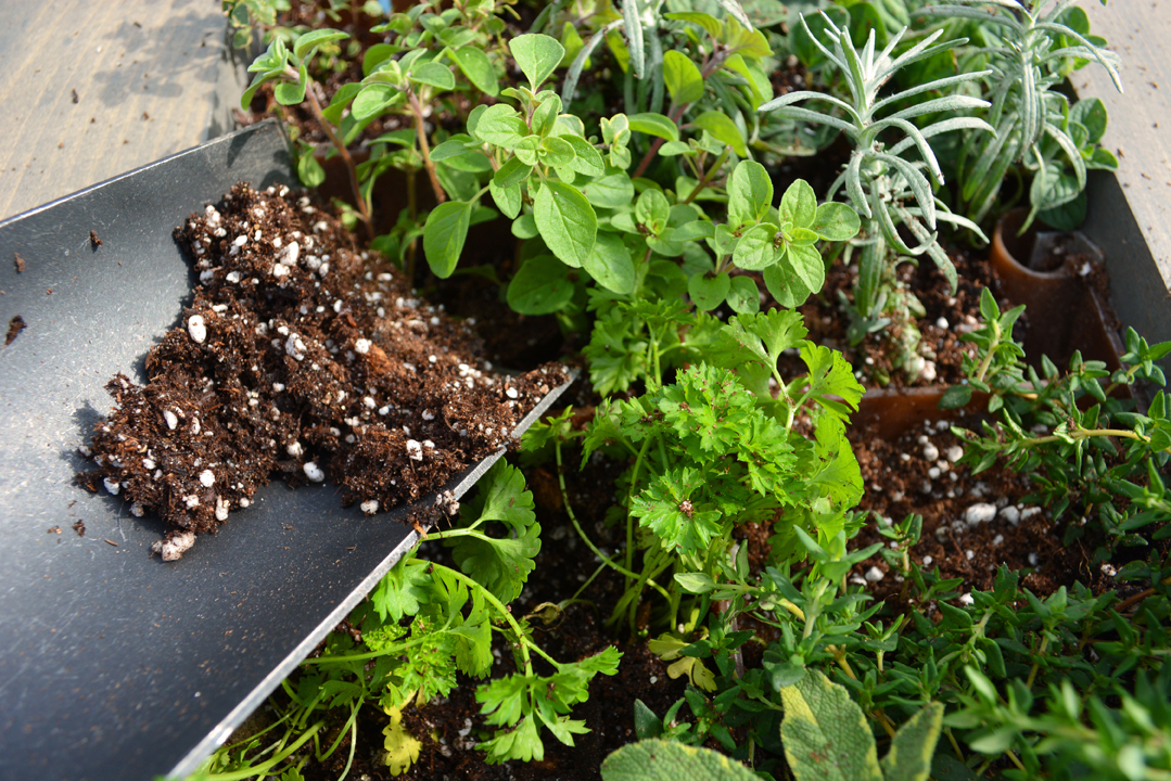 Aromatherapy Living Wall Grovert Filling Leftover Soil