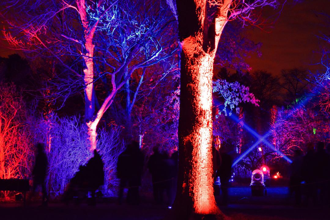Morton Arboretum Illuminations Bark