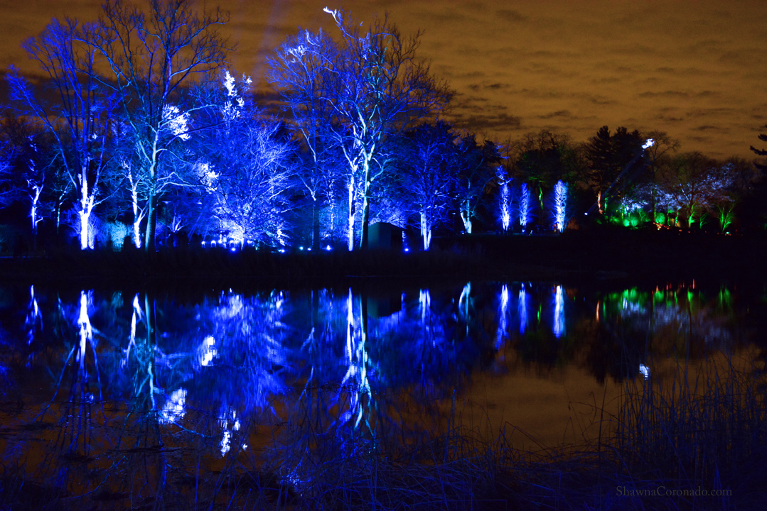 Holiday Lights at Morton Arboretum Illumination