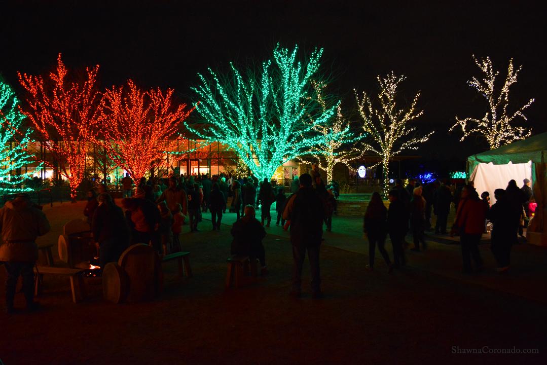 Morton Arboretum Illuminations People and Lighted Trees