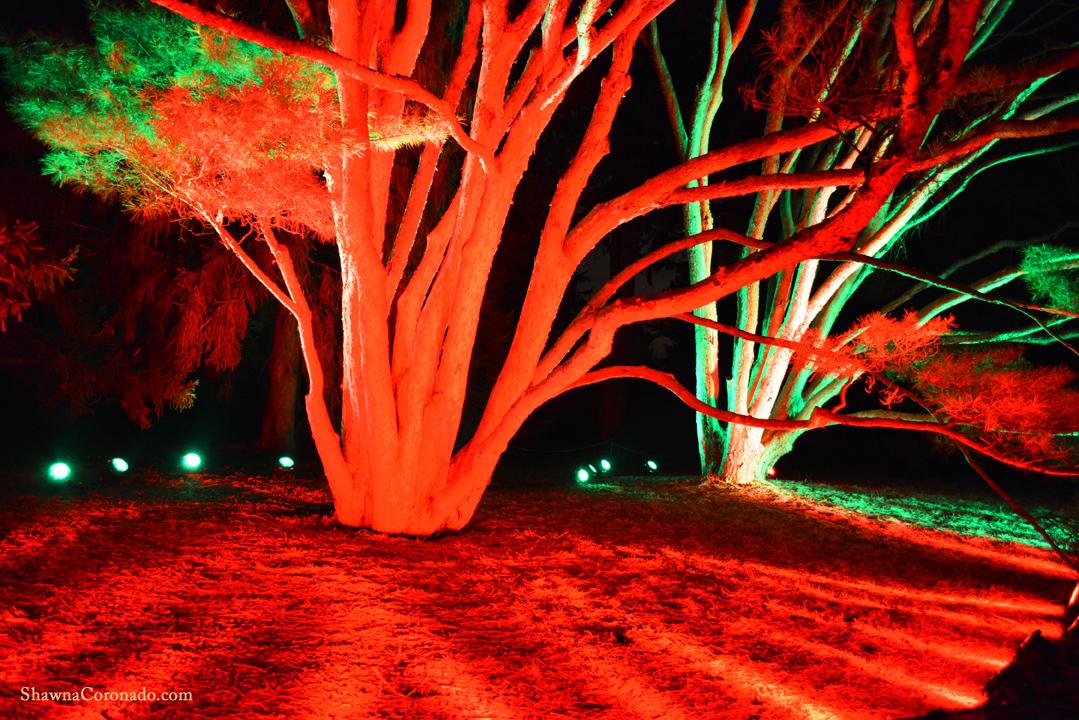 Morton Arboretum Illuminations Red Tree