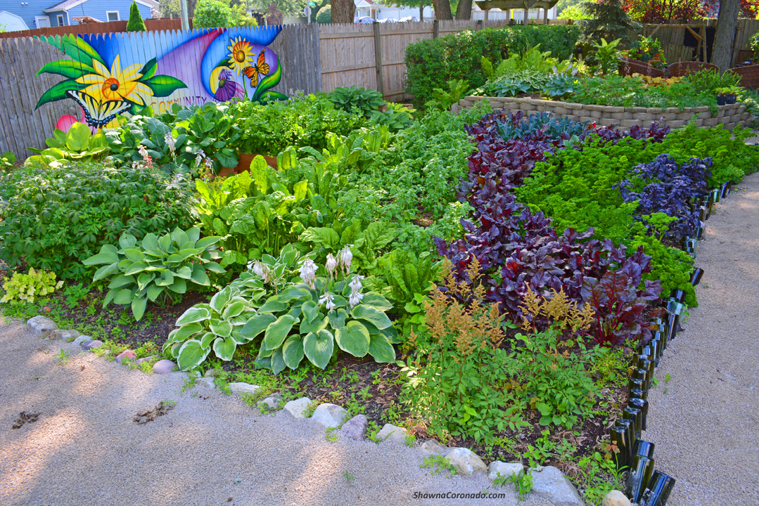 How to Design a Wavy Garden Bed with Path © copyright Shawna Co