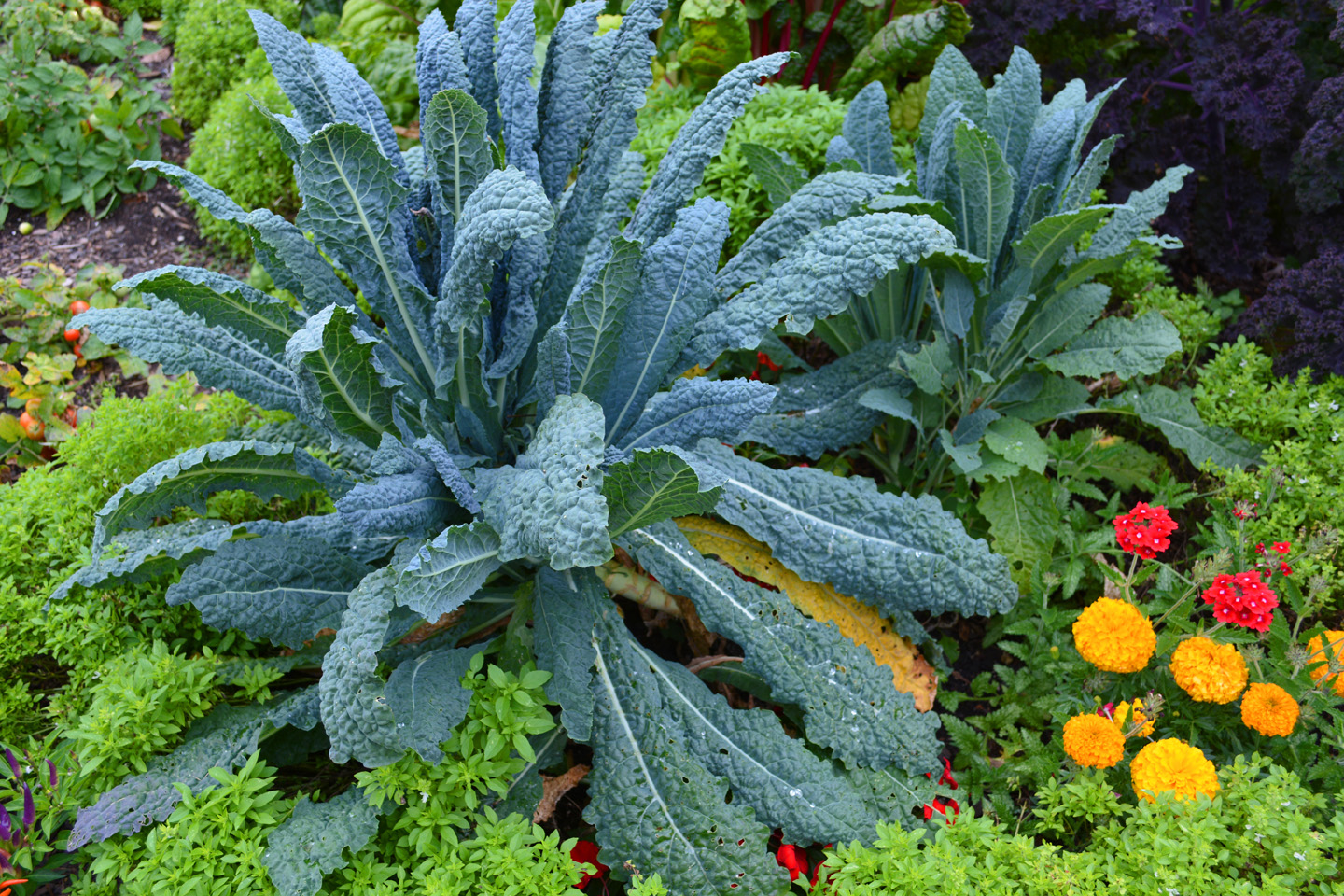 Ornamentals and Vegetables Living Together In Perfect Harmony
