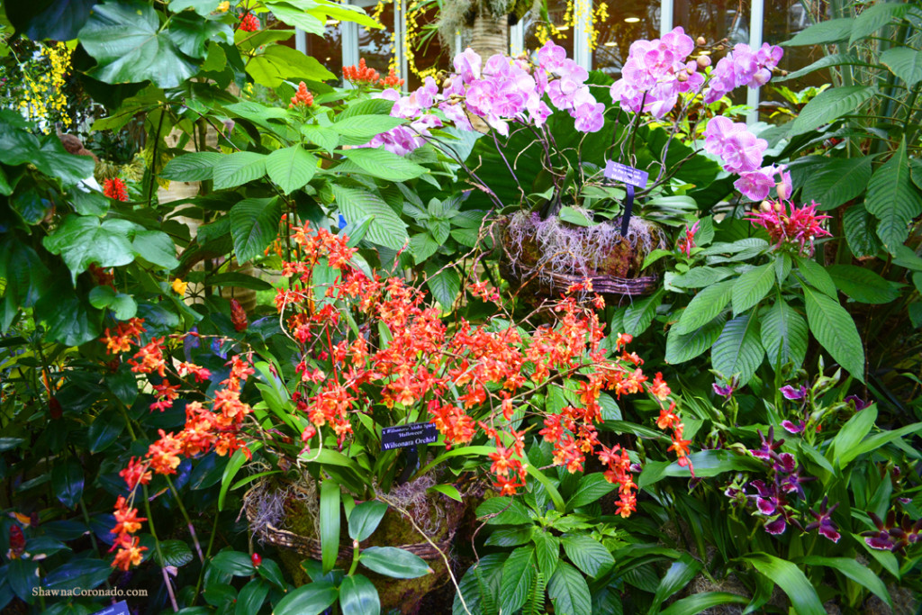 Chicago Botanic Orchid Show Pink and Orange Orchids
