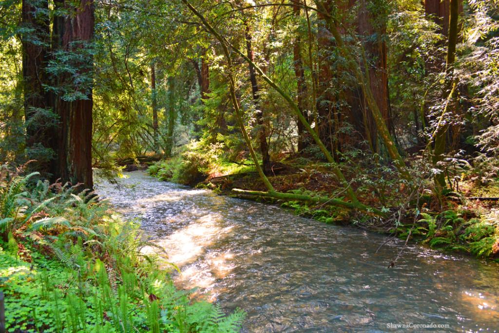 Muir Woods Park River copyright Shawna Coronado