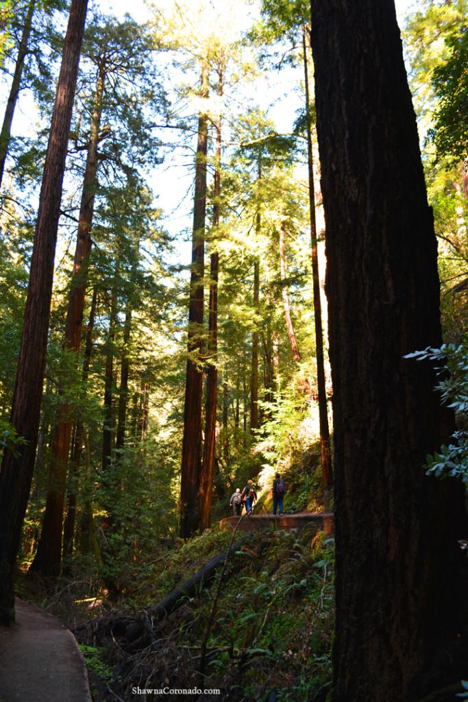 Muir Woods Park Walking Trails copyright Shawna Coronado.jpg