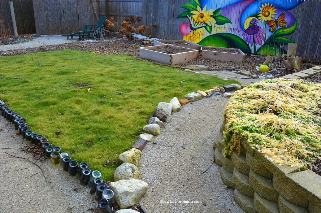Eco Lawn Winter Green