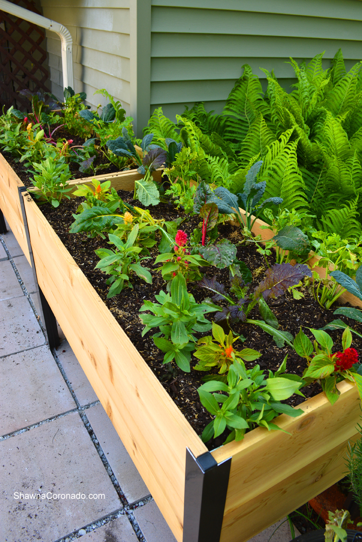 Elevated Garden Bed Flowers and Vegetables