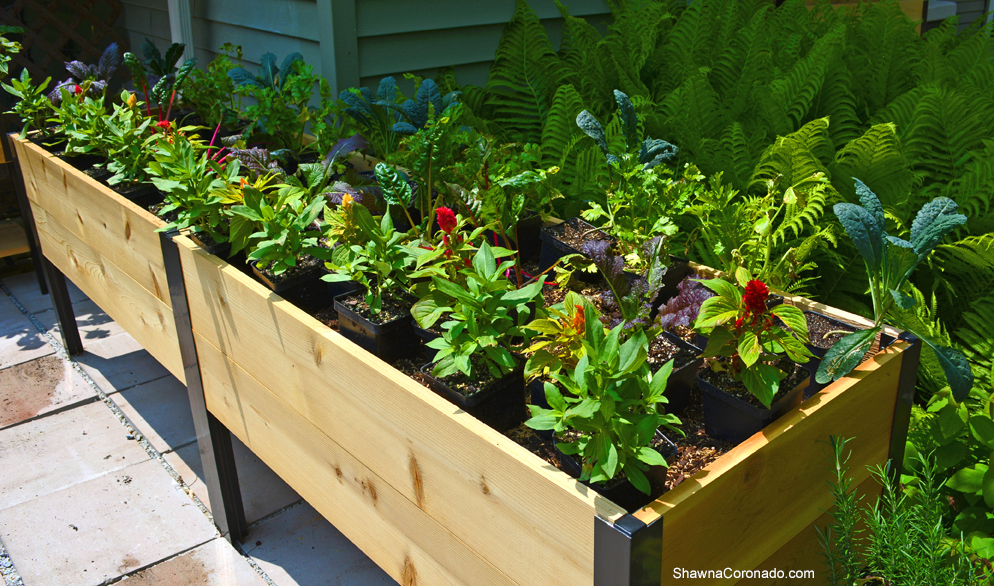 Elevated Planter Box in Garden with Plants