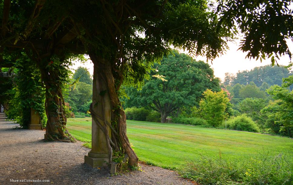 Biltmore Estate Wisteria Vine View