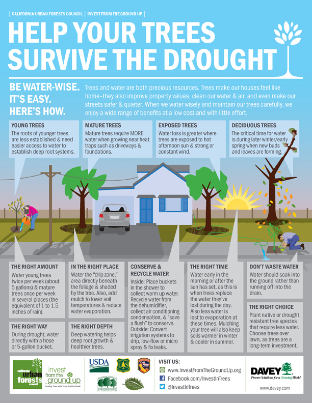 Davey Tree Drought Infographic