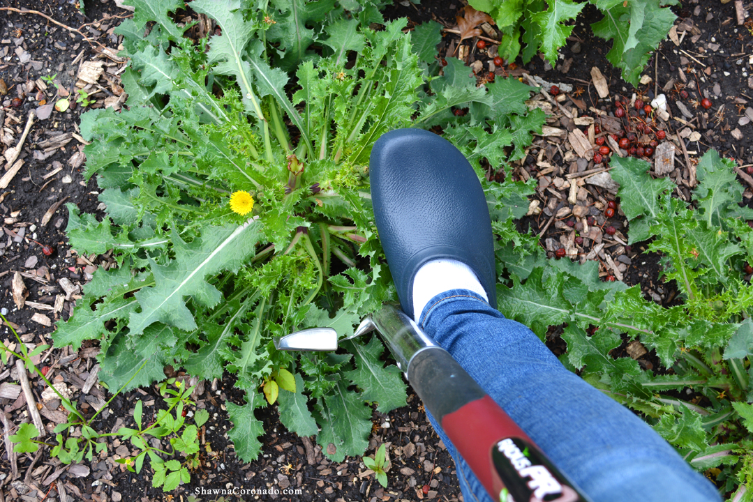 Garden Clogs – A Review