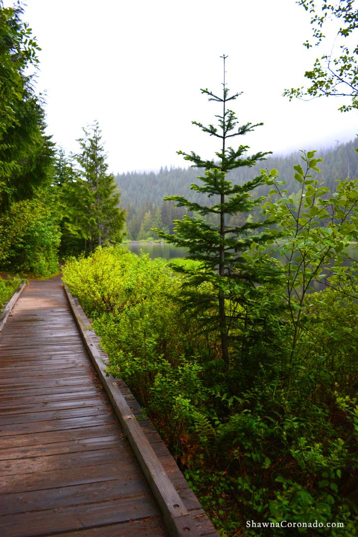 Lake Trillium and Mount Hood Pines copyright Shawna Coronado