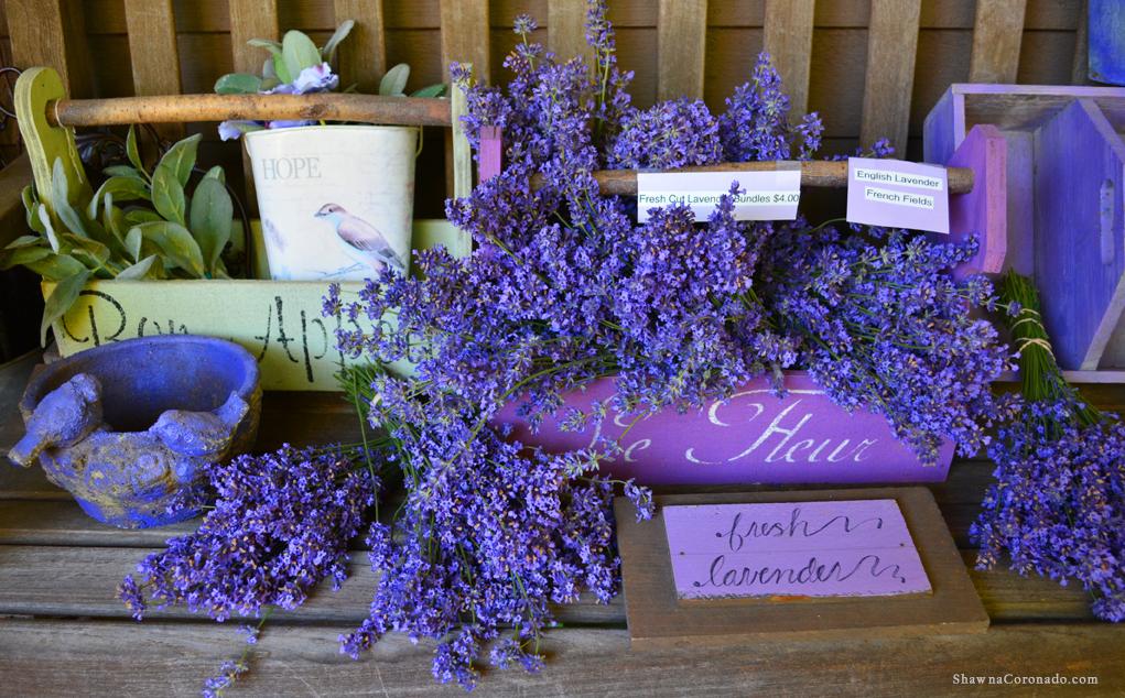Lavender Bundles copyright Shawna Coronado