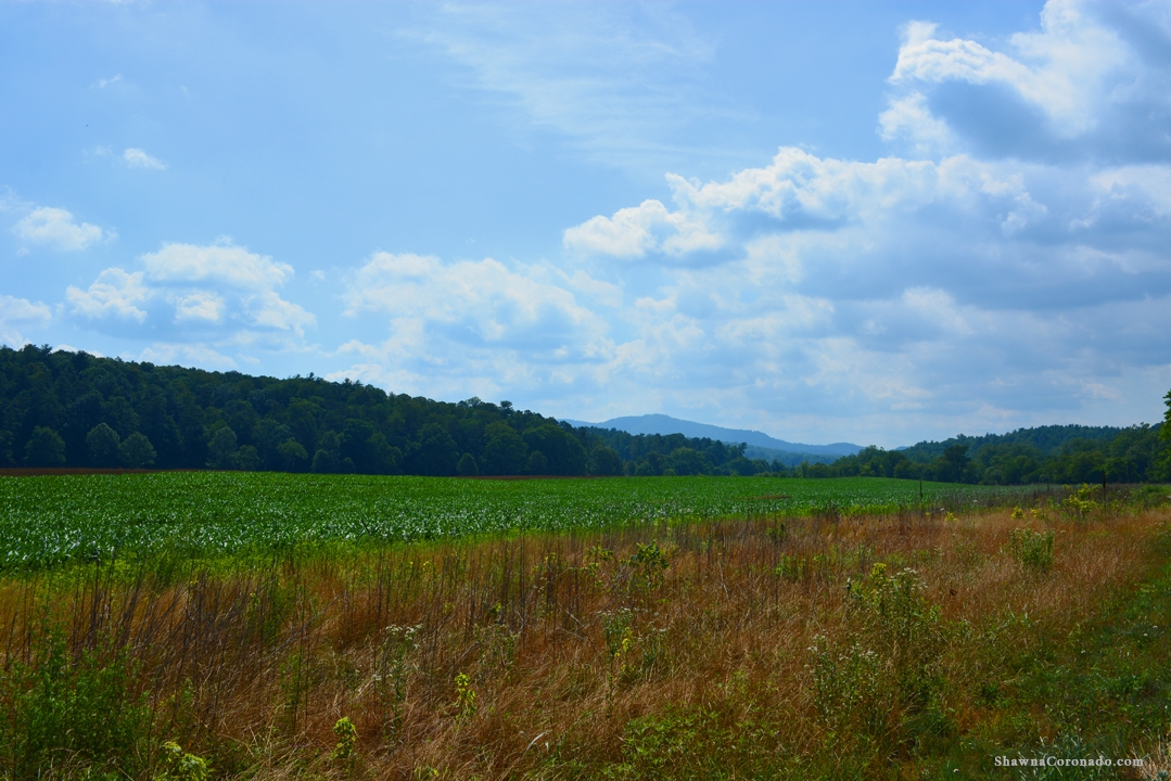 Biltmore Estate Fields