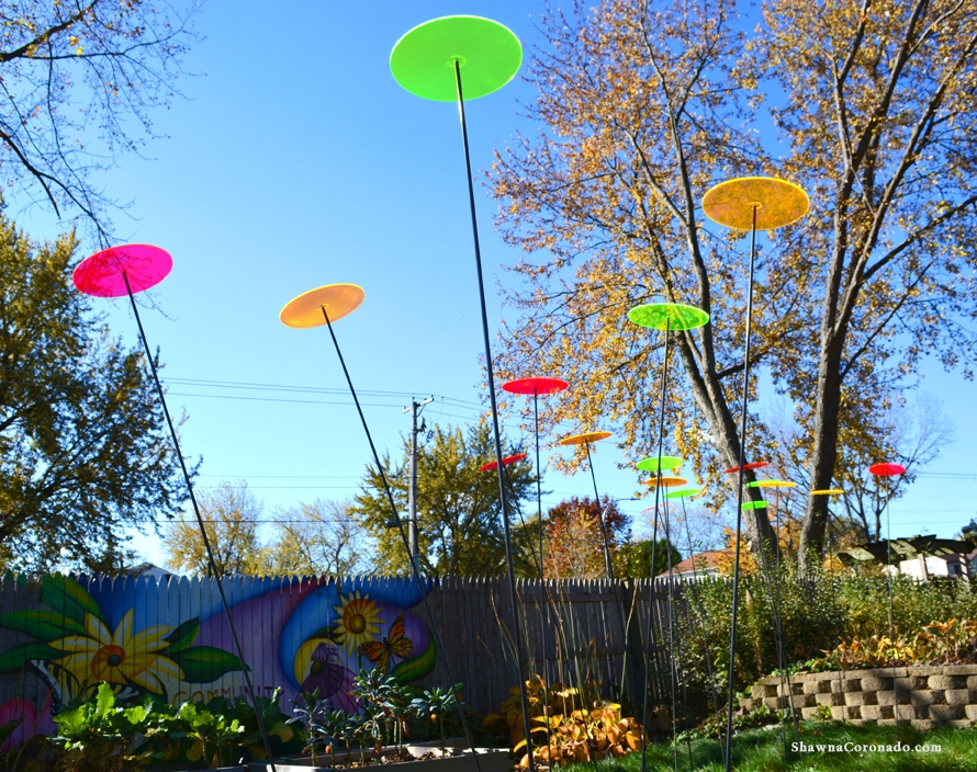 Cazador del sol Multicolor Sunfield Fall Photo