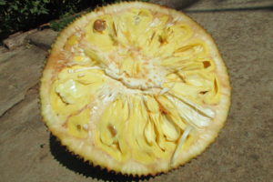 Jackfruit Cut Open