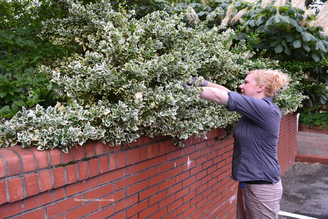 Flower Arranging Biltmore Foliage Cutting
