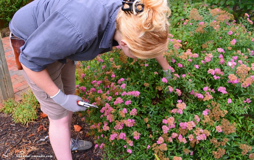 Flowers at Biltmore Estate Van