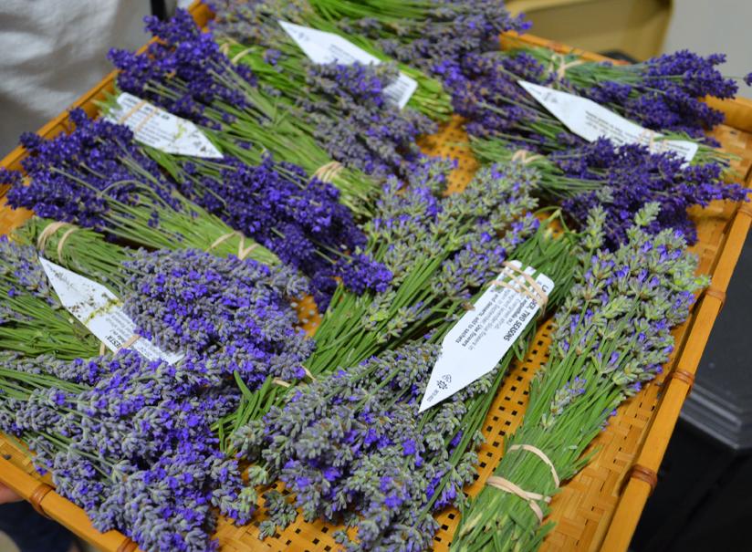 Lavender Bundles to Dry Lavender