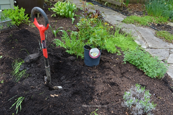 Easy Elegance Rose Dig Planting Hole