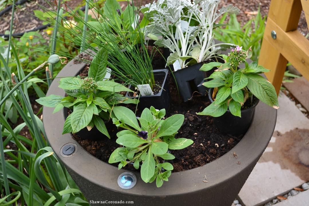 Container Garden technique prepped