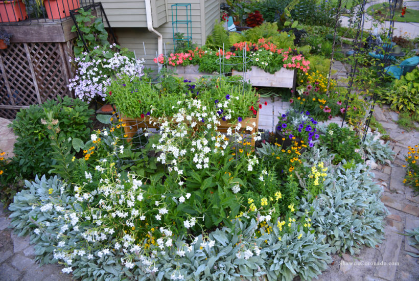 How to Cut Flowers in a Cutting Garden