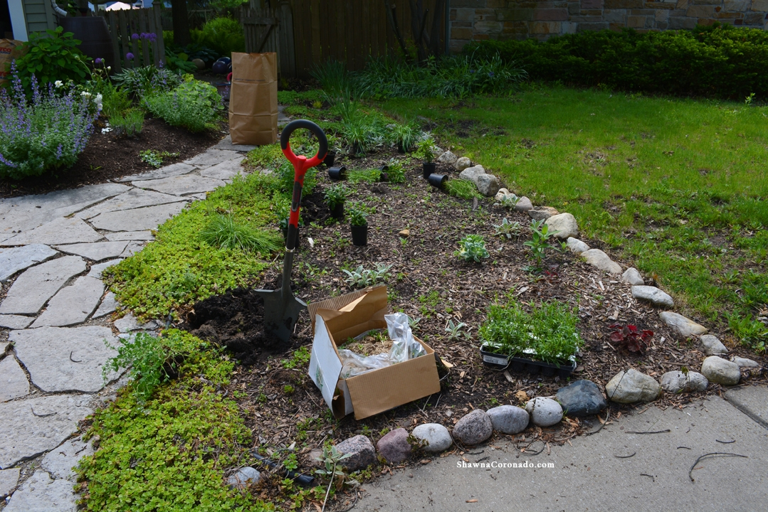 How to Rebuild a Perennial Garden Bed Before Photo