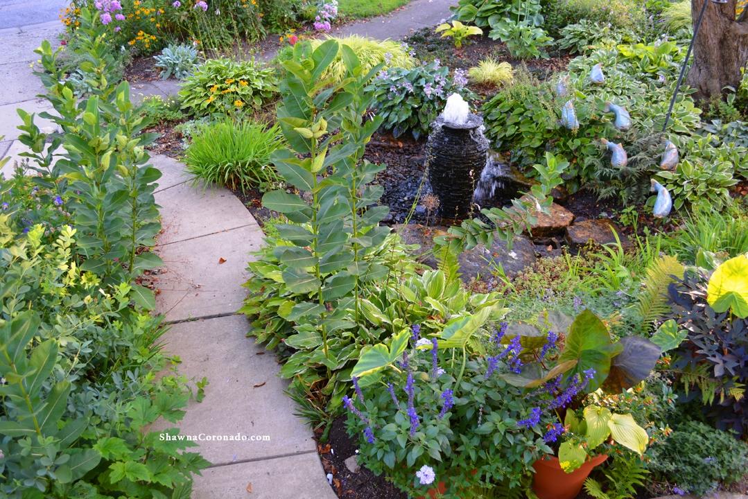 Milkweed design front garden