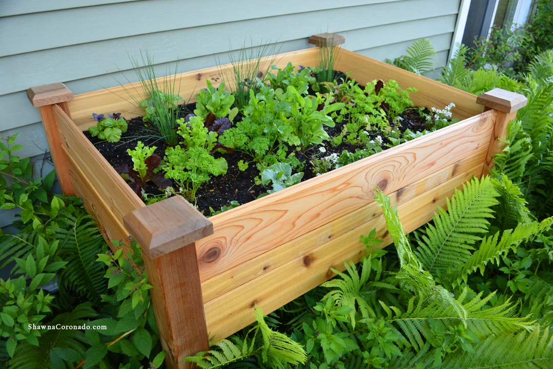 Shade Vegetable Garden Elevated Bed Spring