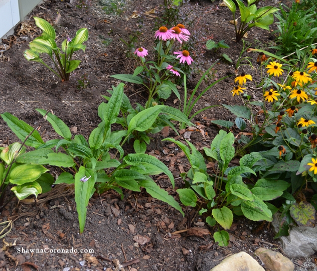 How to Plant a Small Perennial Pollinator Garden