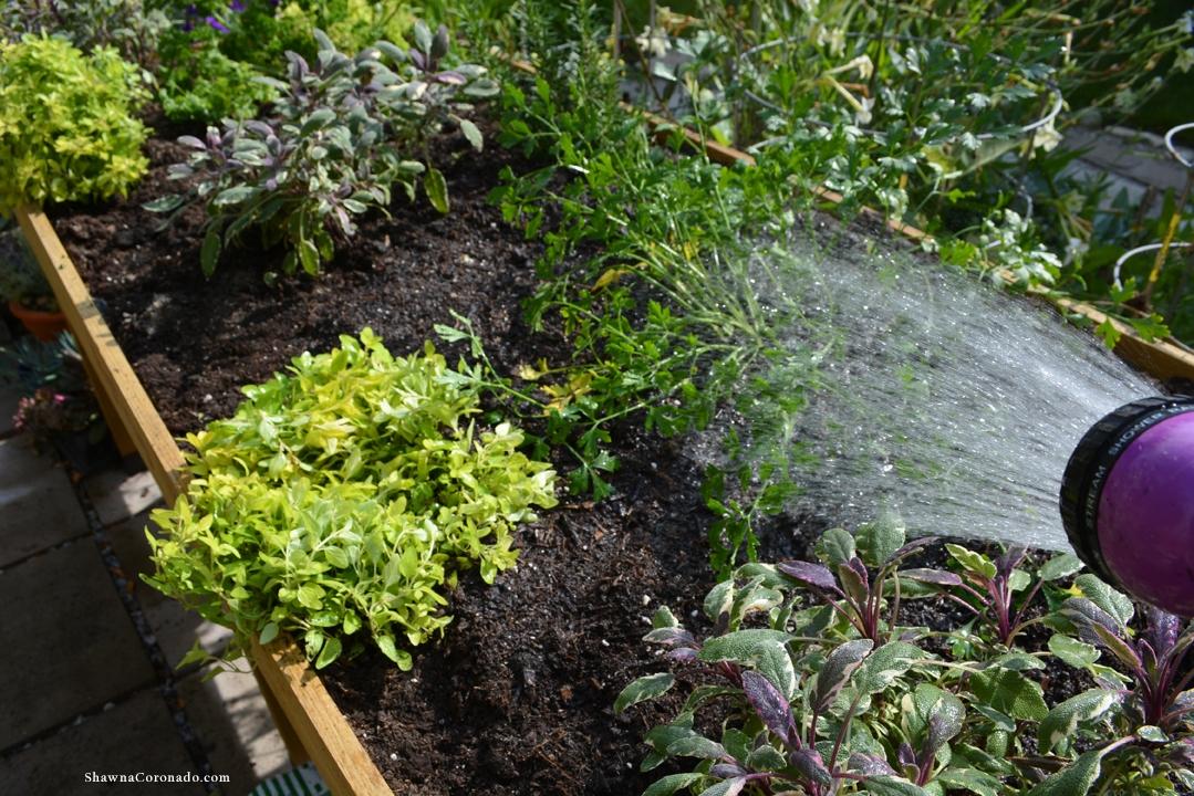 Herb Garden Elevated Bed Watering