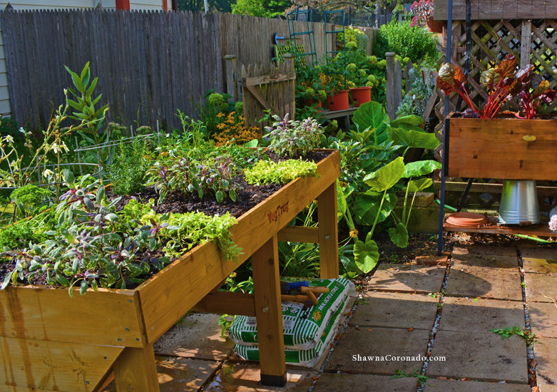 How to Build an Herb Garden Elevated Bed