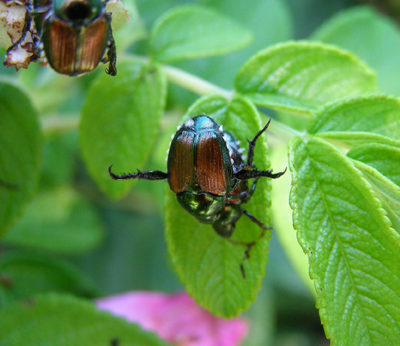 How to Get Rid of Bugs in the Organic Garden