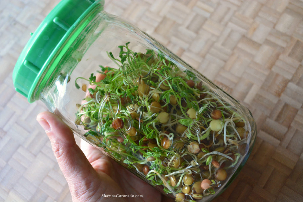 Garden Therapy Mason Jar for Sprouts